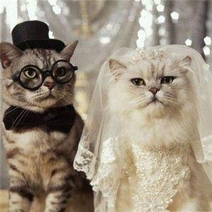 Весільні кішки