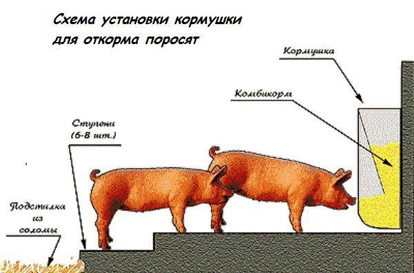 Свинарник і загін своїми руками