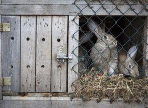 Своя кроляча ферма: розвиваємо бізнес
