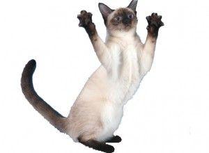 Тайська порода кішок