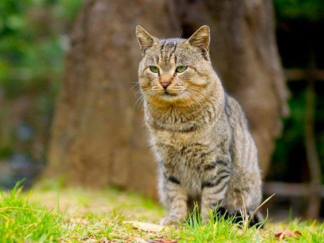 Тепер з мітить котами боротиметься нейросеть