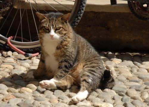 Кішки, спекотна погода і тепловий удар