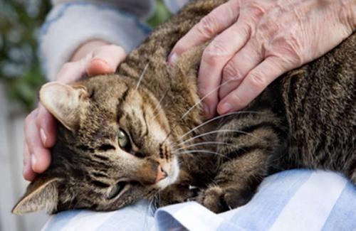 Терапевтичний масаж для кішок