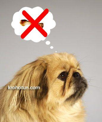 Типові помилки і прорахунки собаківників