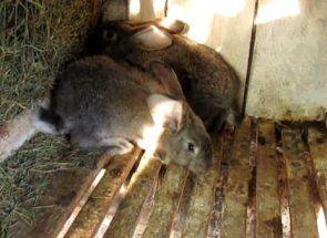 Те що нас оточує - чим з цього можна годувати кролика?