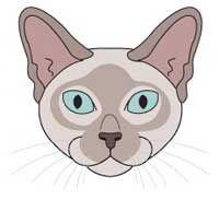 Тонкинская порода кішок. морда
