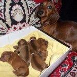 Мама зі своїми дітьми