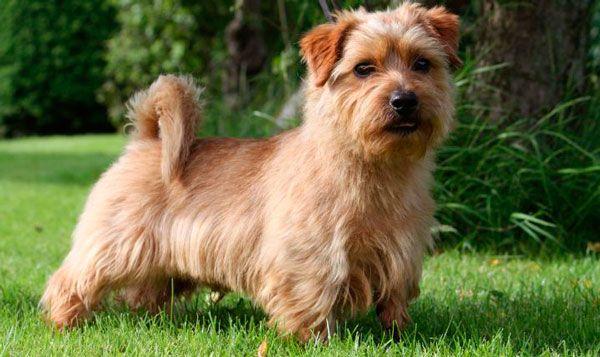 Топ-10: найдорожчі собаки в світі