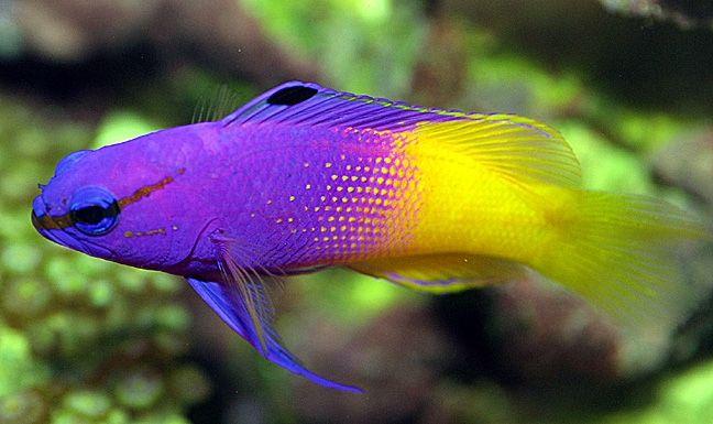 Тор-5 найдорожчих акваріумних риб