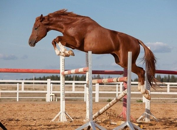 Руда кінь в стрибку