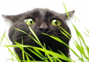 Трава для кішки