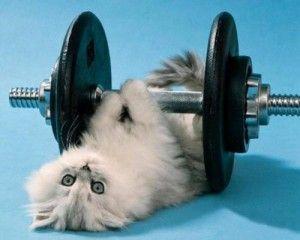 Тренажер для кішки
