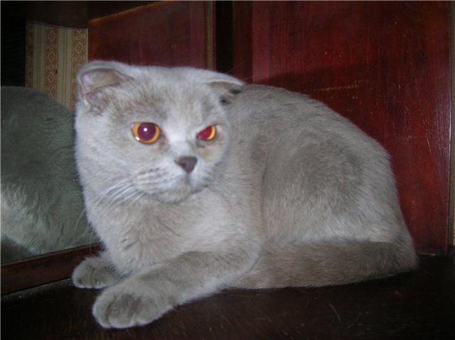 Очі сльозяться у кішки