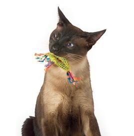 У кошеняти ріжуться зуби