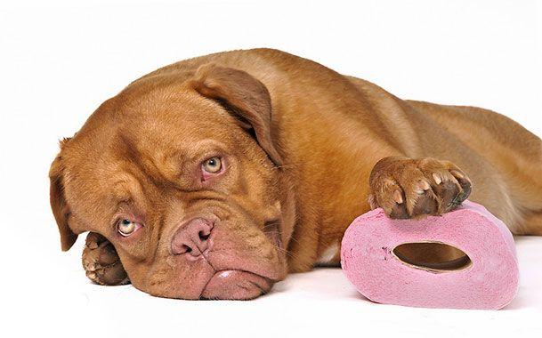 У собаки діарея? Розберемо всі можливі причини