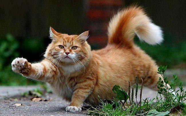 Вчені заявили, що саме кішки зжили зі світу древніх собак