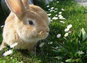 Вчимося правильно годувати кроликів травою