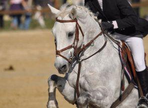 Вчимося правильно сідлати і їздити верхи на коні