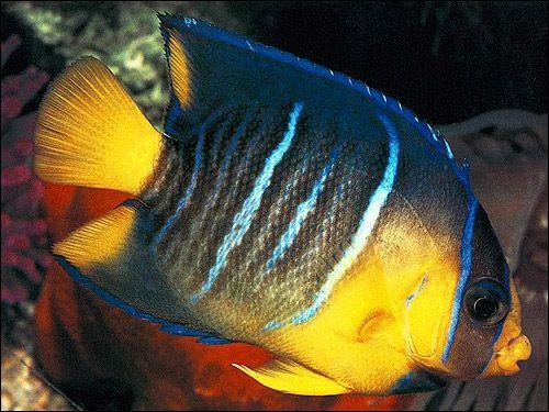 Дивовижні риби