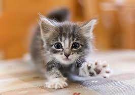До появи кошеня у вашому будинку необхідно підготуватися заздалегідь