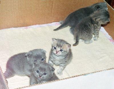Догляд за кошеням.
