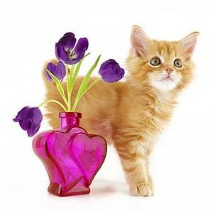 Догляд за кошенятами