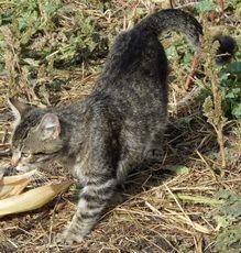 Догляд за літніми кішками