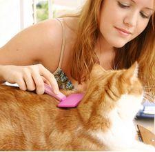 Привчання кішки до грумингу