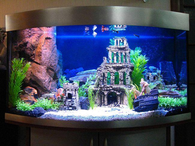Прикрасьте свій акваріум екзотичними рослинами