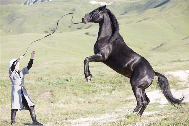 Універсальна порода коней карачаївський - справжній горець