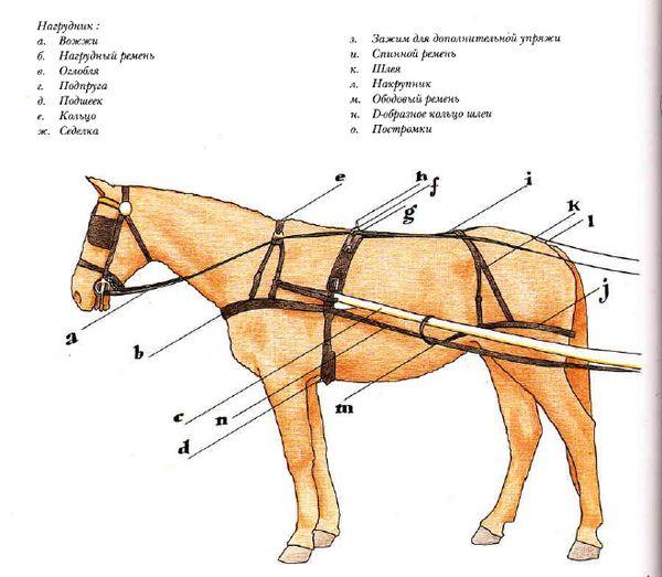 Упряж конем красна: все про кінської збруї