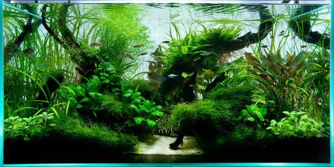 Рівень ph води в акваріумі