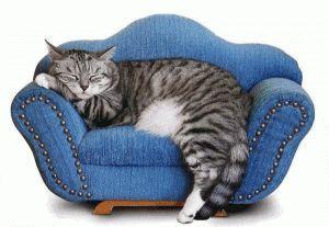Умови життя домашнього кота