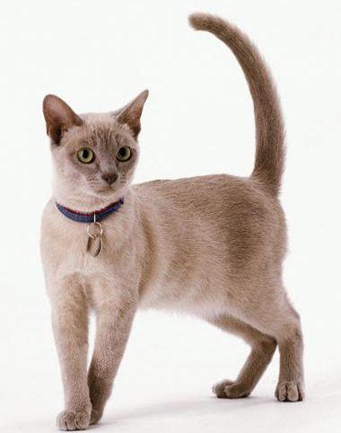 Нашийник для кішки