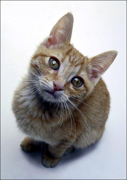 Кішка і собака: вороги чи друзі?