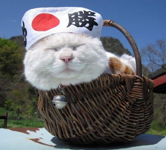 В японії зафіксували рекордну тривалість життя кішок і собак