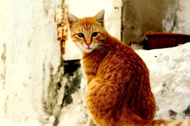 У кіровограді кіт прогнав собак з м`ясного ринку