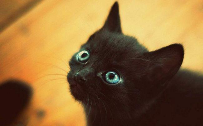 У красноярську кошеня тиждень просидів в порожній квартирі