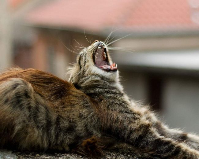 У москві на даху «пятерочки» застряг кошеня