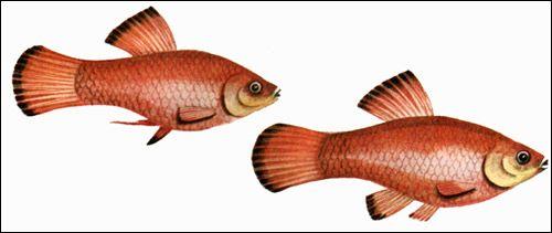 У пошуках найдавніших акваріумістів