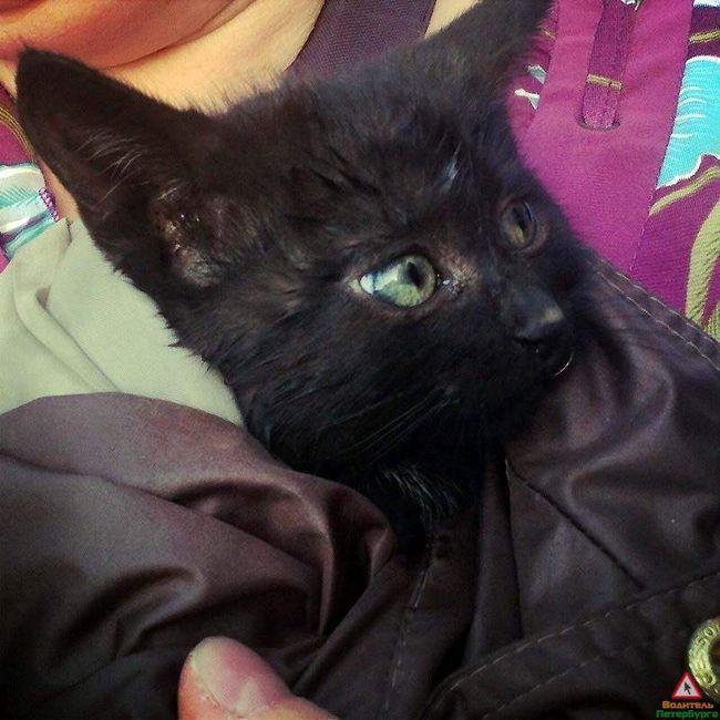 У санкт-петербурзі врятували кошеня, замкненого під капотом автомобіля