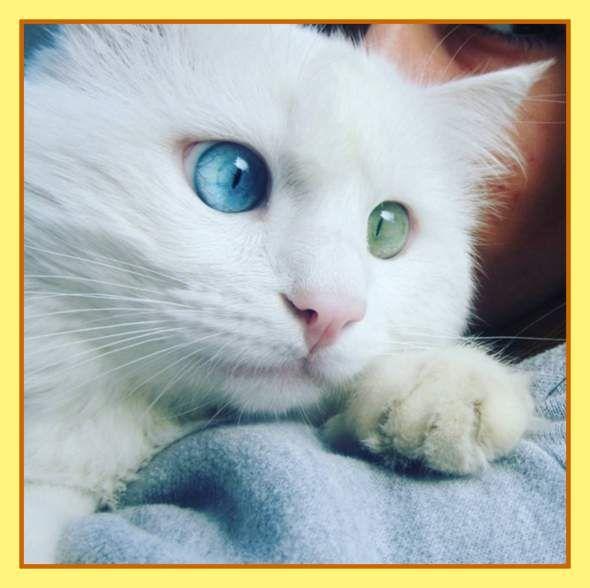Алош, мабуть, найпопулярніший кіт в інтернеті.