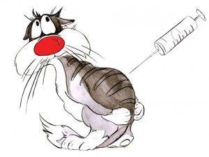 Вакцинація кішок