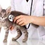 Вакдерм для кішок
