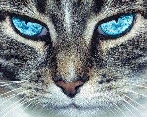 Ваша кішка - екстрасенс!