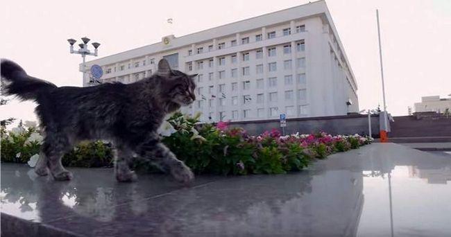 Відео прогулянки простого бездомного кота стало хітом інтернету
