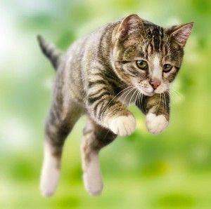 Відео з кішками