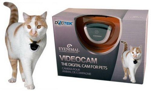 Відеокамера для кішки