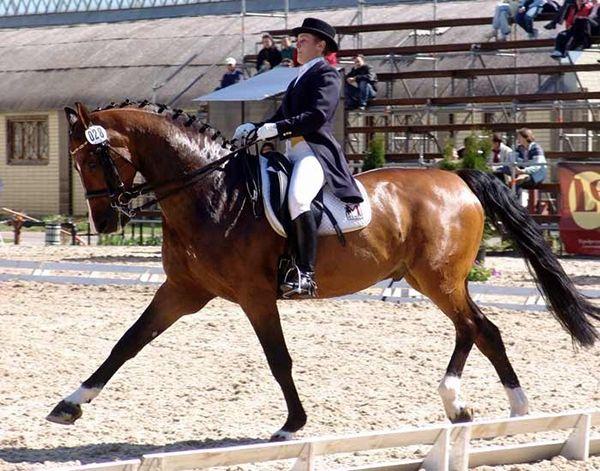 Види і особливості природних і штучних аллюров коней