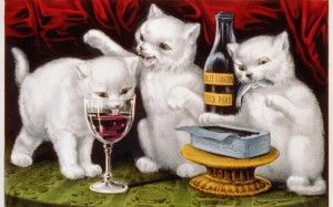 Вино для кішок